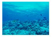 一包に2500mg!たっぷりの美容成分、海洋性コラーゲン